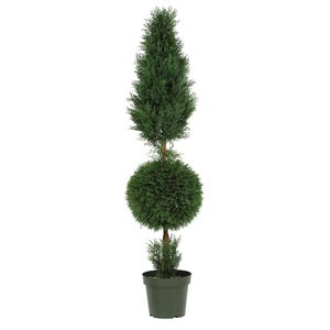 5-Foot Indoor/Outdoor Cypress Ball and Cone Silk Tree