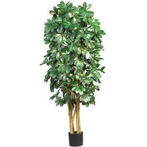 5-Foot Schefflera Silk Tree