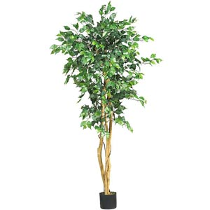 5-Foot Ficus Silk Tree