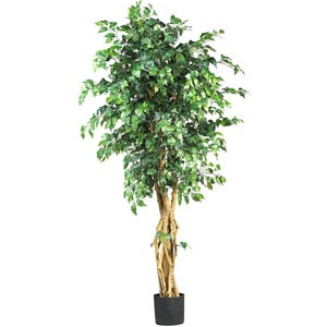 6-Foot  Palace Style Ficus Silk Tree