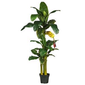 6-Foot Triple Stalk Banana Silk Tree