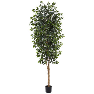 Green 8 Foot Ficus Tree