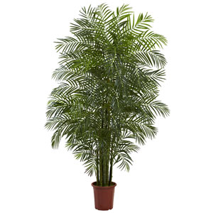 Green 7.5 Foot Areca Palm