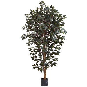 Green 6 Foot Capensia Ficus Tree