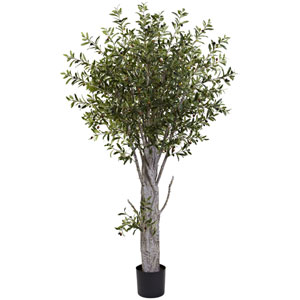 Green 6 Foot Olive Tree