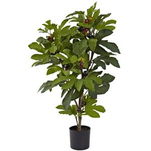 Green 32-Inch Fig Tree