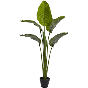 Green 64-Inch Travellers Palm Tree