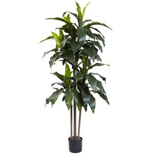Green 5 Foot Dracaena Plant