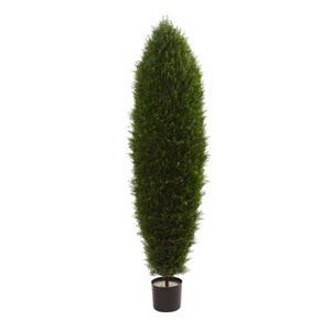 Green 5 Foot Cypress Tree