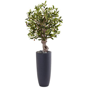 3.5 Ft. Olive Tree in Gray Cylinder Planter