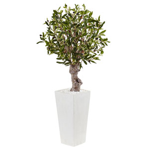 3.5 Ft. Olive Tree in White Tower Planter