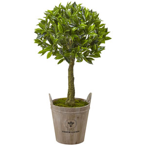 38-Inch Sweet Bay Topiary with European Barrel Planter