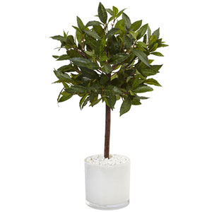 2 Ft. Sweet Bay Tree in White Glossy Cylinder