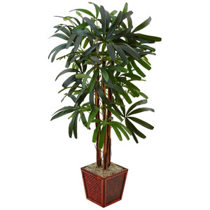 5 Ft. Raphis Palm Tree in Bamboo Planter