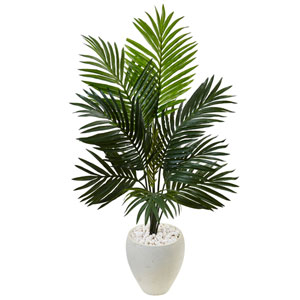 4.5 Ft. Kentia Palm Tree in White Oval Planter