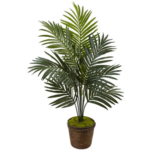 4 Ft. Kentia Palm Tree in Coiled Rope Planter