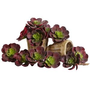 Burgundy 5-Inch Echeveria Succulent Plant, Set of 12