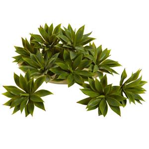 Green Mini Agave Succulent Plant, Set of 12
