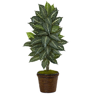 4 Ft. Zebra Plant in Coiled Rope Planter