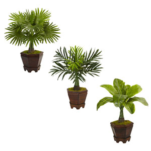 Assorted Mini Palm Trees in Planter, Set of Three