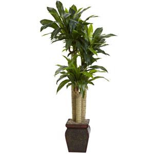 Green 4.5 Foot Cornstalk Draceana with Vase