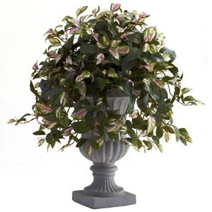 Hoya with Decorative Urn