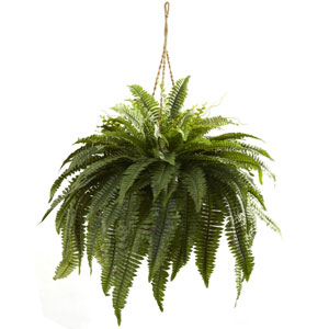 Green Double Giant Boston Fern Hanging Basket
