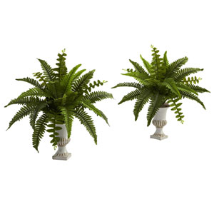 Green Boston Fern with Urn, Set of Two