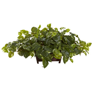 Green Pothos with Rectangle Decorative Planter
