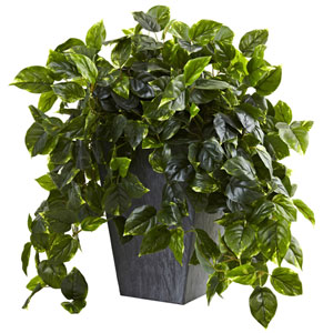 Green Hanging Pothos with Slate Planter