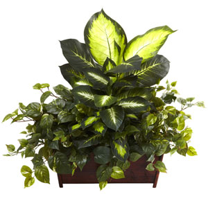 Green Golden Dieffenbachia, Philo and Pothos with Wood Planter