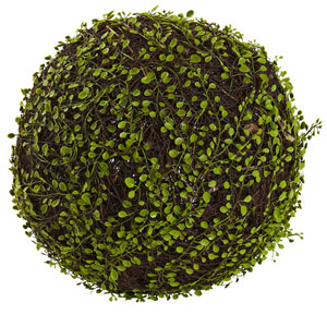 Green Mohlenbechia Ball