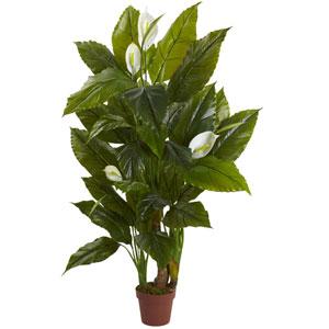 Green 4.5 Foot Spathyfillum Plant