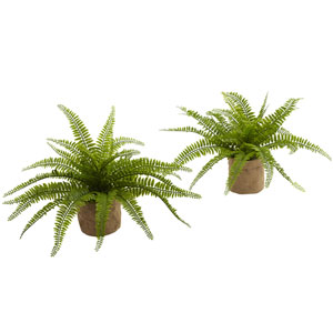 Green Boston Fern with Burlap Planter, Set of Two