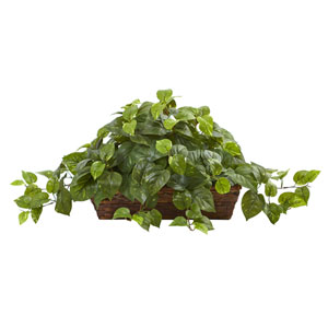 Green Pothos with Ledge Basket