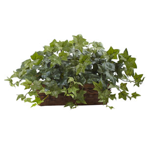 Green Puff Ivy with Ledge Basket