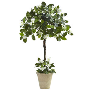 Green 3 Foot Stephanotis Topiary with Planter
