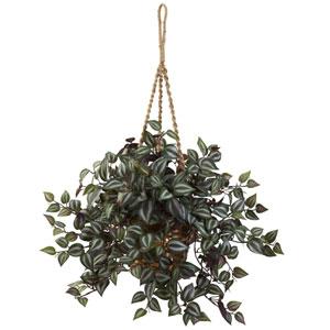 Wandering Jew Hanging Basket