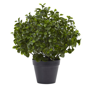 Green 23-Inch Peperomia Plant