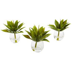Agave Succulent with Vase, Set of 3