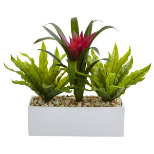 Bromeliad and Birds Nest in Rectangular Planter