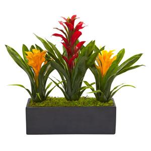 Bromeliads in Rectangular Planter