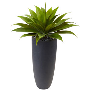 Agave in Gray Cylinder Planter