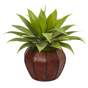 Agave Succulent in Weave Planter
