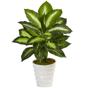 Dieffenbachia in Swirl Planter