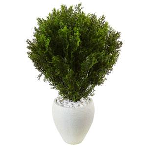 3 Ft. Cedar in Oval Textured Planter