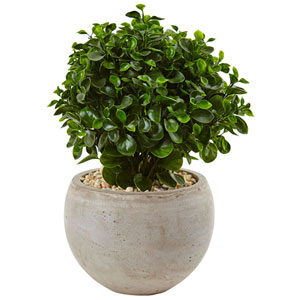 2 Ft. Eucalyptus in Sand Colored Bowl UV Resistant