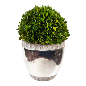 Accents Preserved Boxwood Topiary