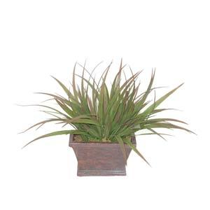 Grass in Rectangular Pot