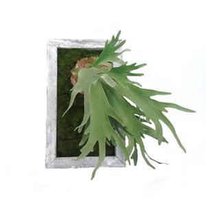 Faux Staghorn Fern in Wooden Tray